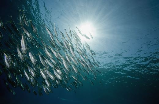 Fish Tech Fotolia 9681897 XL